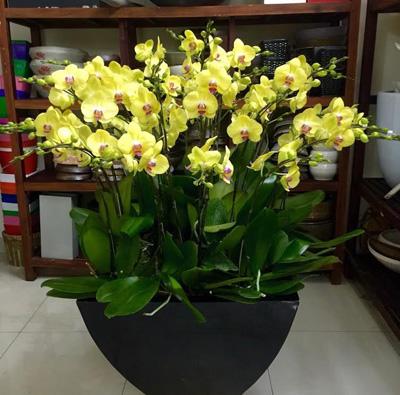Shop hoa tươi giá rẻ nhất - 20