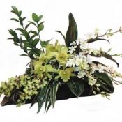Arrangement of Orchids