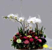 Hoa sinh nhật 038