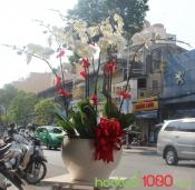 Lan Hồ Điệp 049